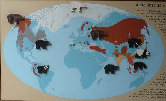 Berenpopulatie overzicht