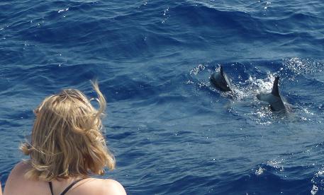 Dolfijnen spotten in het wild