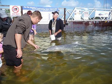 Dolfijn voeren in Australië
