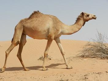 Dieren spotten in het Midden-Oosten