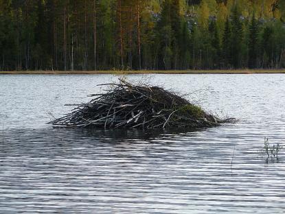 Een beverburcht in Zweden