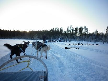 Huskytocht in zweden