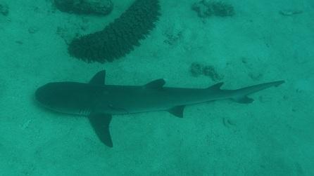 Met haaien duiken