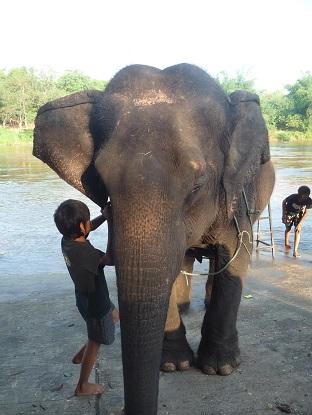 Olifanten wassen in Thailand