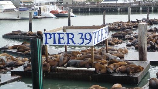 Zeeleeuwen spotten in San Francisco