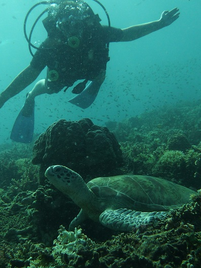 Schildpadden spotten in Maleisië