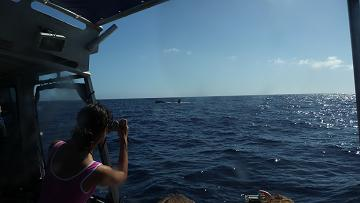 Watching Humpbackwhales