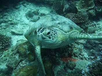 Duiken en snorkelen bij Mauritius